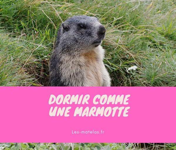 dormir-marmotte